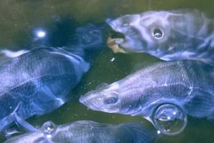 Aqua-19