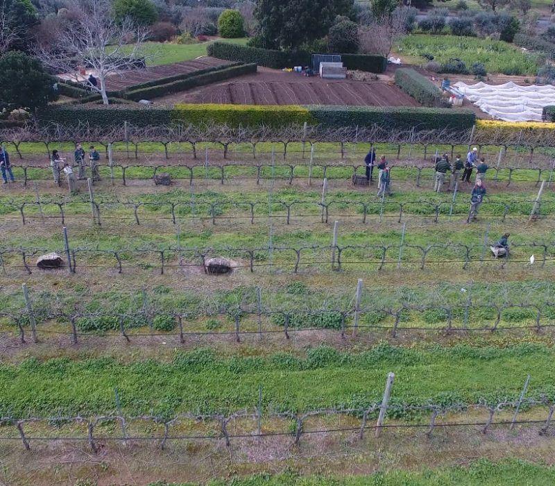 Students in Vineyard