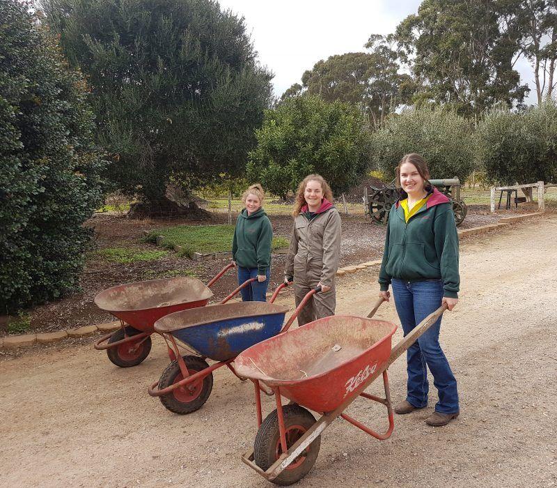 Wheel Barrows on Farm
