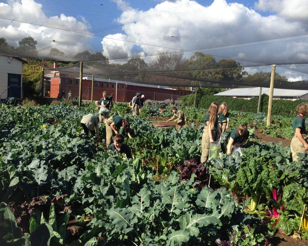 yr 8 veg garden 1