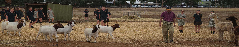 Band Goats 1