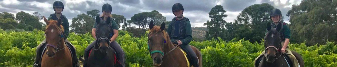 Horses in Vines
